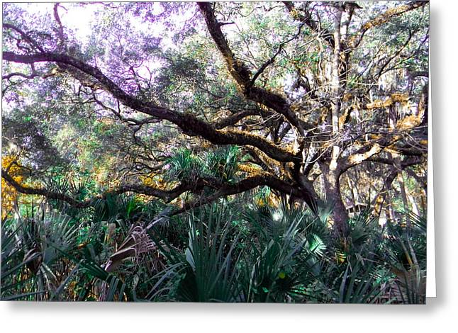 Live Oak Greeting Card by Christy Usilton