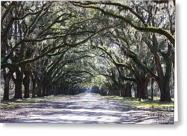 The South Photographs Greeting Cards - Live Oak Lane in Savannah Greeting Card by Carol Groenen