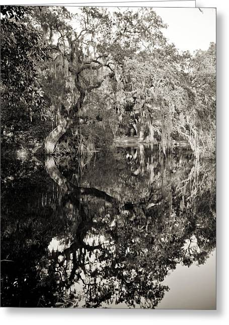 Live Oak Trees Greeting Cards - Live Oak Reflections Greeting Card by Dustin K Ryan