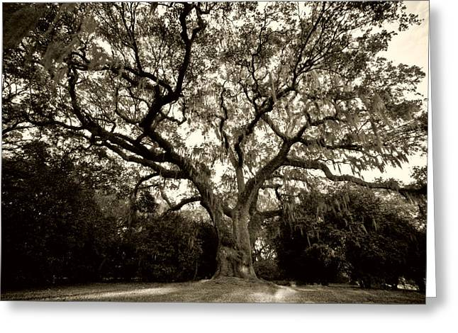 Live Oak Trees Greeting Cards - Live Oak Tree with Spanish Moss Greeting Card by Dustin K Ryan