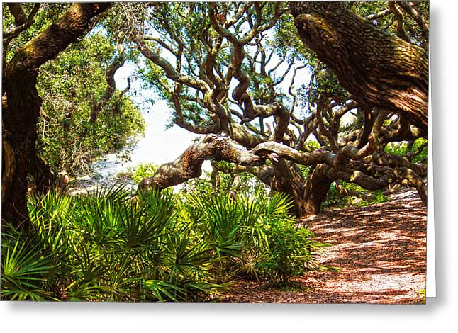 Tanya Chesnell Greeting Cards - Live Oaks Greeting Card by Tanya Chesnell