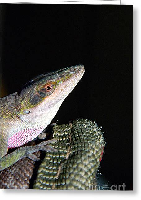 Gecko Print Greeting Cards - Lizard Greeting Card by Ester  Rogers