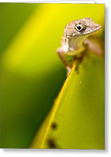Naples Greeting Cards - Lizard Greeting Card by Jack Scicluna