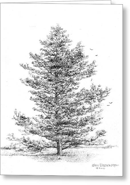 Arkansas Drawings Greeting Cards - Loblolly Pine Greeting Card by Jim Hubbard