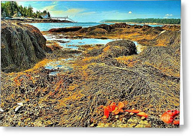 Maine Islands Greeting Cards - Lobster Fest Greeting Card by Adam Jewell