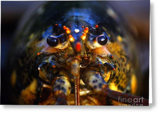 Confronting Greeting Cards - Lobster Greeting Card by John Greim