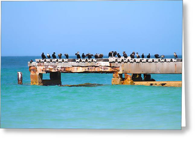 Cormorant Greeting Cards - Local Hangout Greeting Card by Betsy C  Knapp