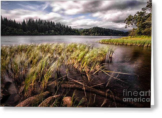 Visit Greeting Cards - Loch Ard From the Reed beds landscape Greeting Card by John Farnan