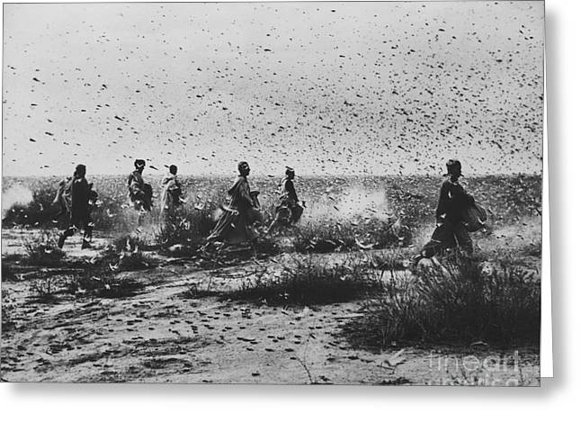Locust Greeting Cards - Locust Swarm Greeting Card by Photo Researchers