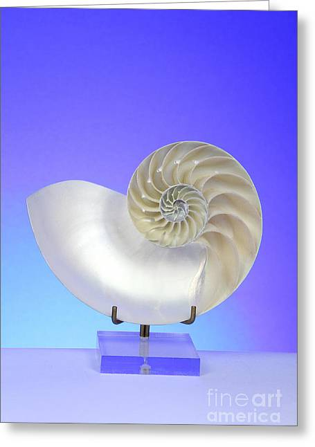 Logarithmic Spiral Greeting Card by Photo Researchers, Inc.