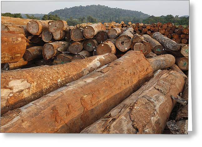 Logging Images Greeting Cards - Logged Timber From The Tropical Greeting Card by Cyril Ruoso