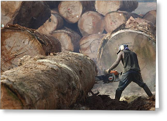 Logging Images Greeting Cards - Logger Cutting Tree Trunk, Cameroon Greeting Card by Cyril Ruoso