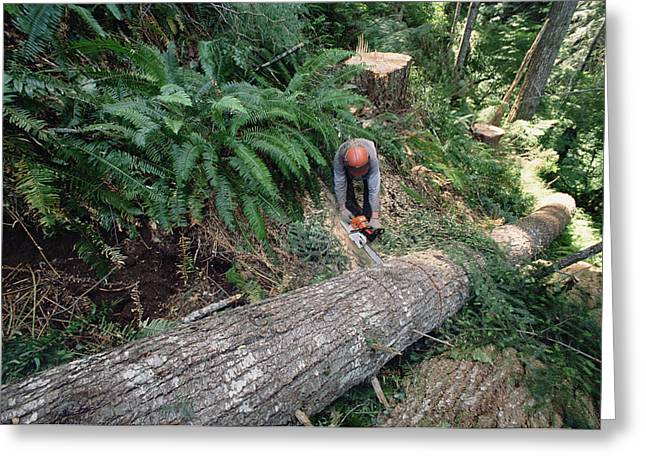 Logging Images Greeting Cards - Loggers Clear Cutting Temperate Greeting Card by Gerry Ellis