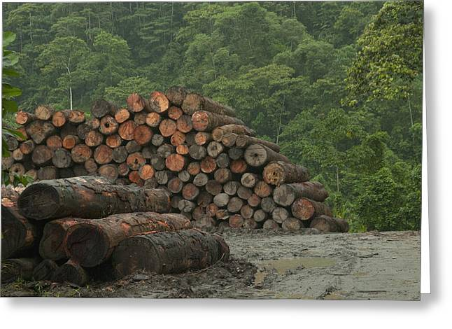 Logging Images Greeting Cards - Logging Of Native Rainforest, Ecuador Greeting Card by Murray Cooper