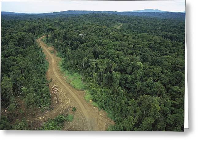 Logging Images Greeting Cards - Logging Road In Lowland Tropical Greeting Card by Gerry Ellis