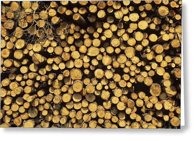 Woodpile Greeting Cards - Logs Greeting Card by David Aubrey