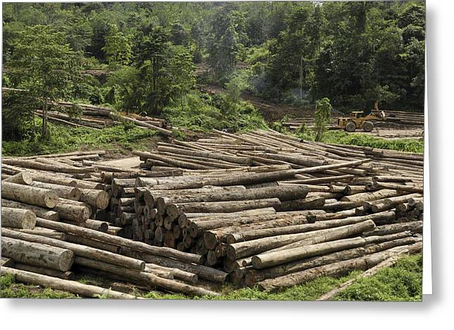 Logging Images Greeting Cards - Logs In Logging Area, Danum Valley Greeting Card by Thomas Marent