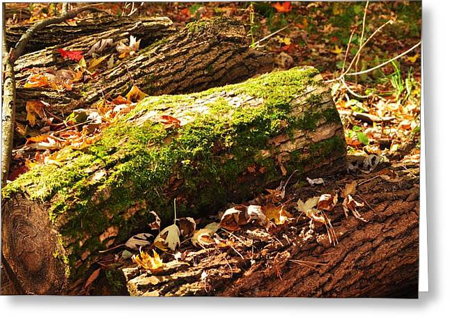 logs  Greeting Card by Puzzles Shum