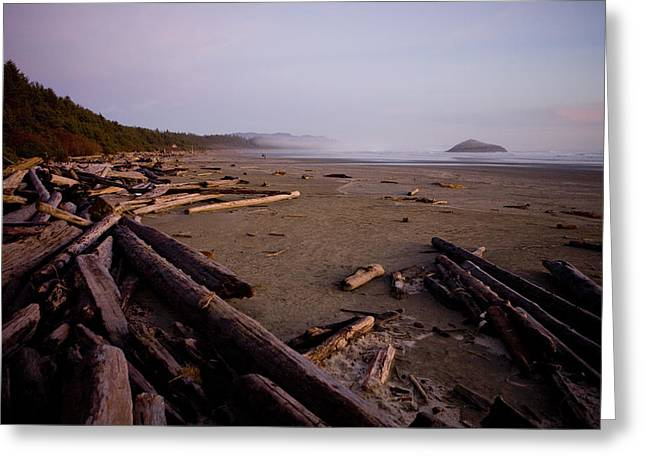 Deforestation Greeting Cards - Logs Spill Out Onto Long Beach Greeting Card by Taylor S. Kennedy