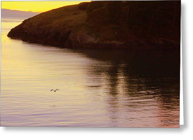 Lone Bird At Rosario Beach Point Greeting Card by Randall Thomas Stone
