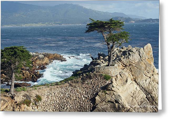 Pfeiffer Beach Greeting Cards - Lone Cypress at Pebble Beach Greeting Card by PJQandFriends Photography