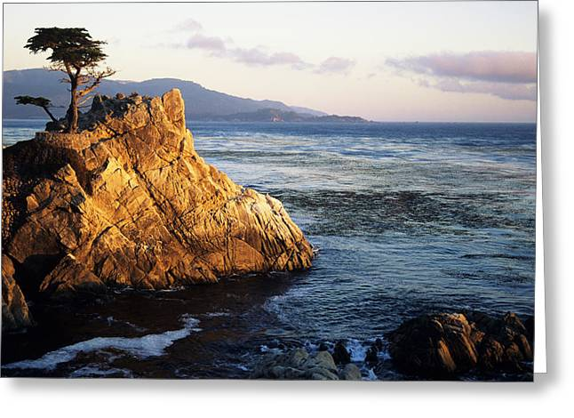Big Sur Greeting Cards - Lone Cypress Tree Greeting Card by Michael Howell - Printscapes