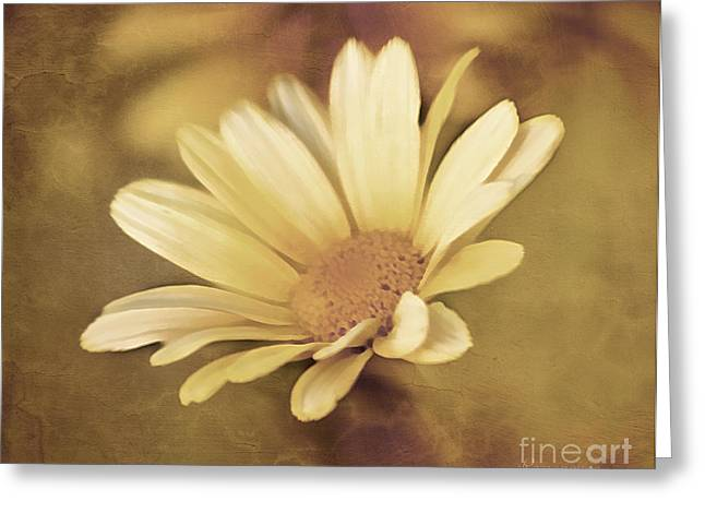 Ecommerce Greeting Cards - Lone Daisy - Vintage Style Greeting Card by Georgiana Romanovna