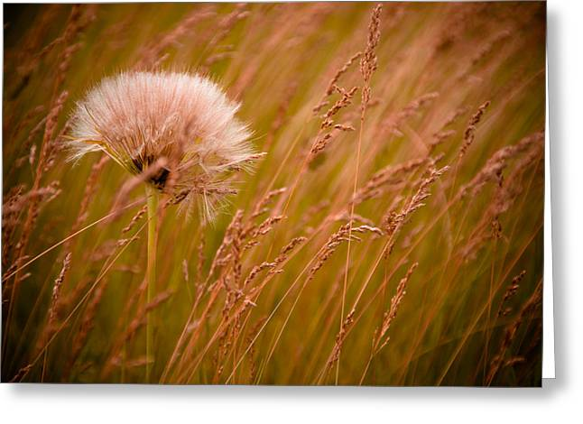 Weed Greeting Cards - Lone Dandelion Greeting Card by Bob Mintie