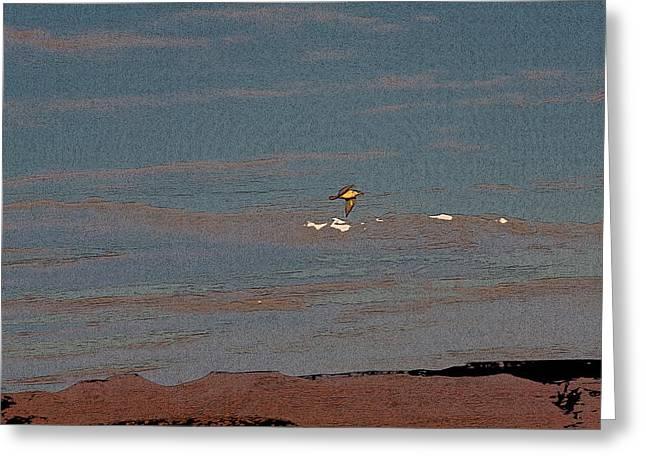 Sea Gulls Greeting Cards - Lone Gull  Greeting Card by Gilbert Artiaga