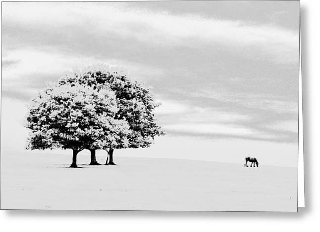 Lone Horse Digital Greeting Cards - Lone Horse Greeting Card by Richard Downes