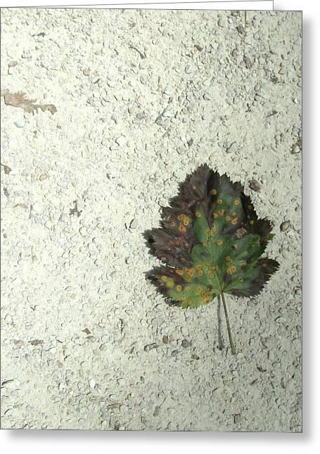 Lone Leaf Greeting Card by Todd Sherlock