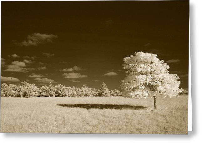 Infer Greeting Cards - Lone Maple Greeting Card by Steve Gravano