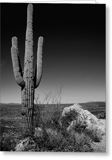 Hike Greeting Cards - Lone Saguaro Greeting Card by Chad Dutson