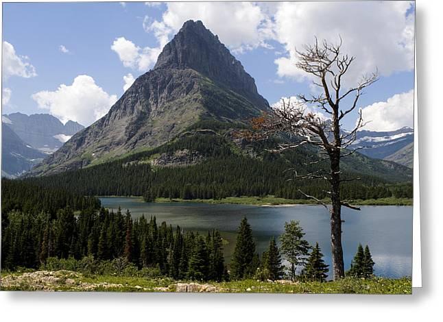 Lone Tree At Sinopah Mountain Greeting Card by Lorraine Devon Wilke