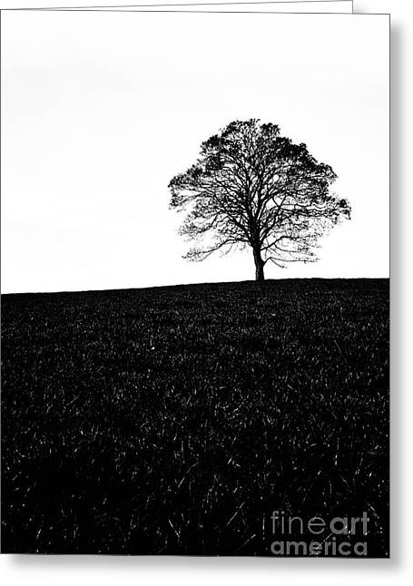 40mm Greeting Cards - Lone Tree Black and White silhouette Greeting Card by John Farnan