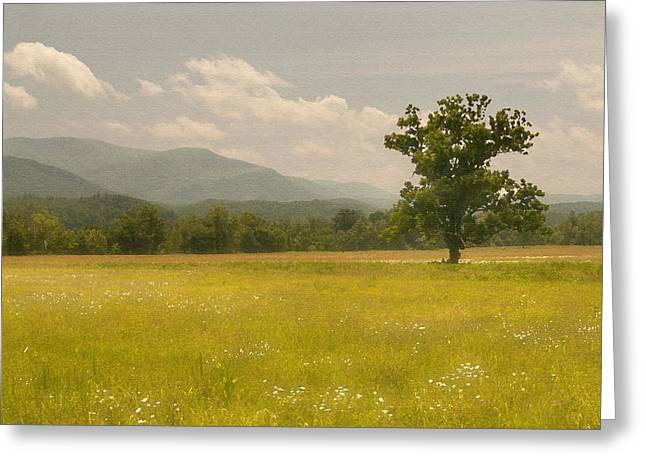 Meadown Greeting Cards - Lone Tree Greeting Card by Cindy Haggerty