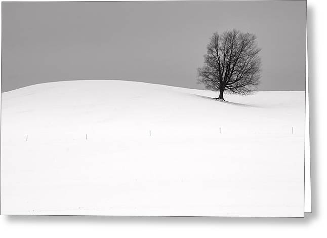 Snow Tree Prints Greeting Cards - Lone Tree in Winter Greeting Card by Randall Nyhof