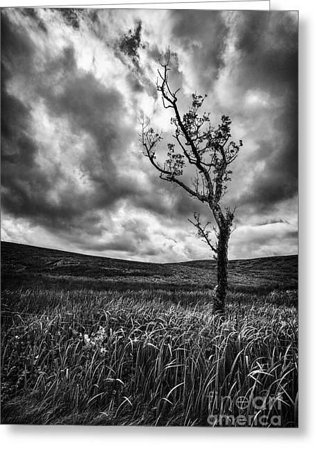 Ayrshire Greeting Cards - Lone Tree on the Ayrshire moors Greeting Card by John Farnan