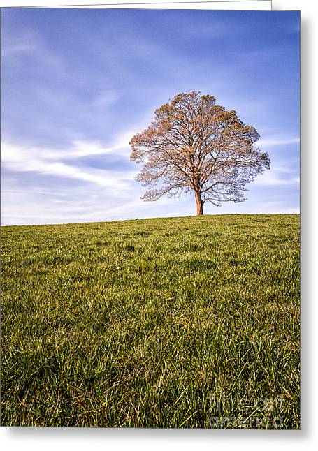 40mm Greeting Cards - Lone Tree on the hill colour Greeting Card by John Farnan