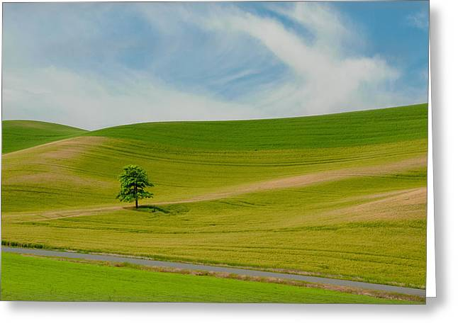 Idaho Photographs Greeting Cards - Lone Tree on the Idaho Palouse Greeting Card by Alvin Kroon
