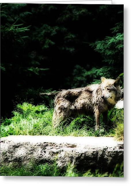 Alpha Wolf Greeting Cards - Lone Wolf Greeting Card by Simone Hester