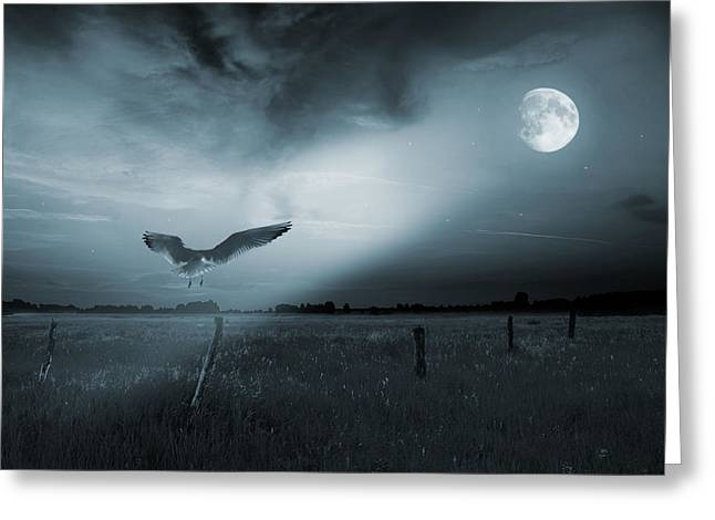 Flying Seagull Digital Art Greeting Cards - Lonely bird in moonlight  Greeting Card by Jaroslaw Grudzinski