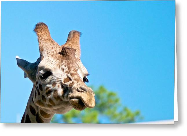 Naples Greeting Cards - Lonely Giraffe Greeting Card by Jack Scicluna