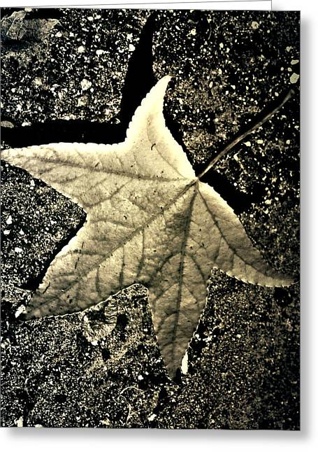 Jerry Cordeiro Photographs Greeting Cards - Lonely Leaf Greeting Card by Jerry Cordeiro
