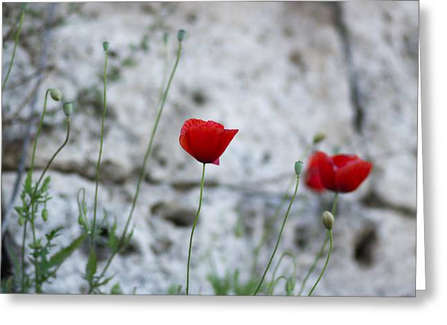 Milos Dacic Greeting Cards - Lonely poppy Greeting Card by Milos Dacic