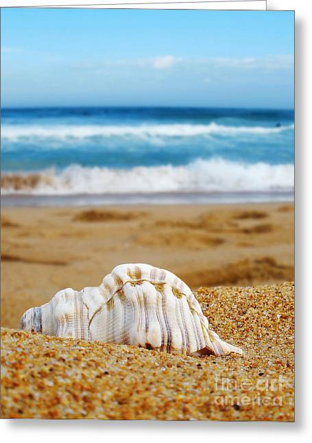 Kaye Menner Shells Greeting Cards - Lonely Shell Greeting Card by Kaye Menner