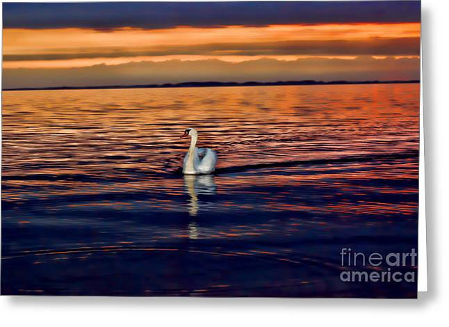 Swans At Dawn Greeting Cards - Lonely Swan At Sunset Greeting Card by Alexandra Jordankova
