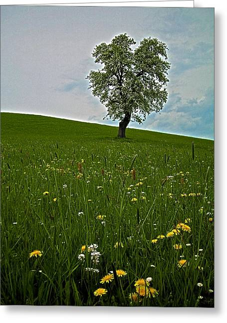 Wandern Greeting Cards - Lonely Tree ...  Greeting Card by Juergen Weiss