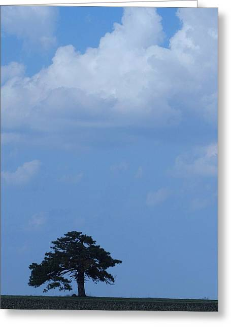 Lonely Tree #2 Greeting Card by Todd Sherlock