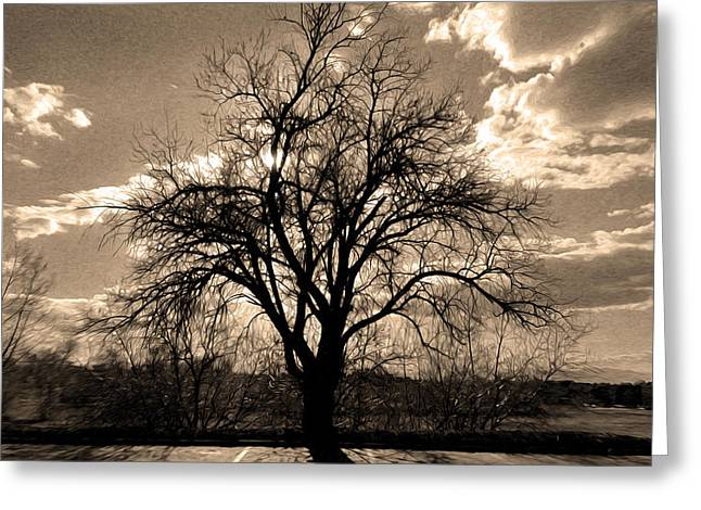 Lonely Tree At Sunset Greeting Card by Sergio Aguayo